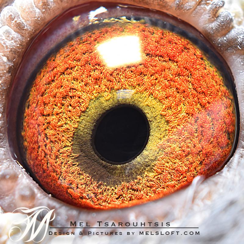 eye of king speed.jpg