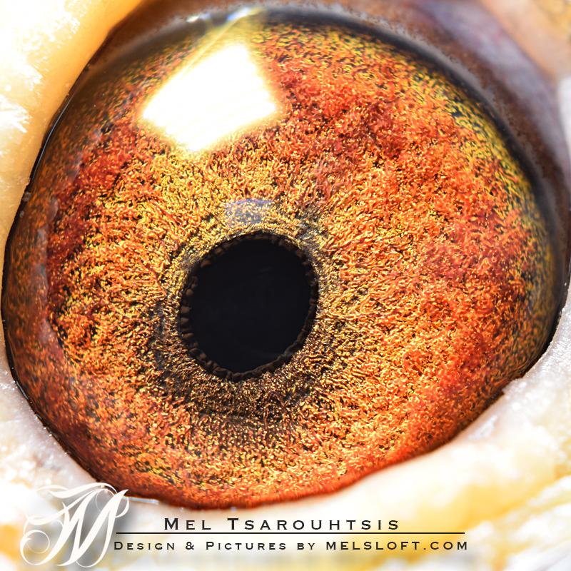 eye of mandy.jpg