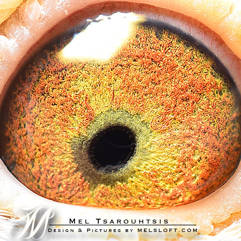 45 eye.jpg