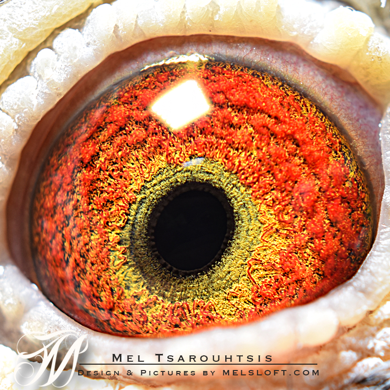 eye of dark crack.jpg