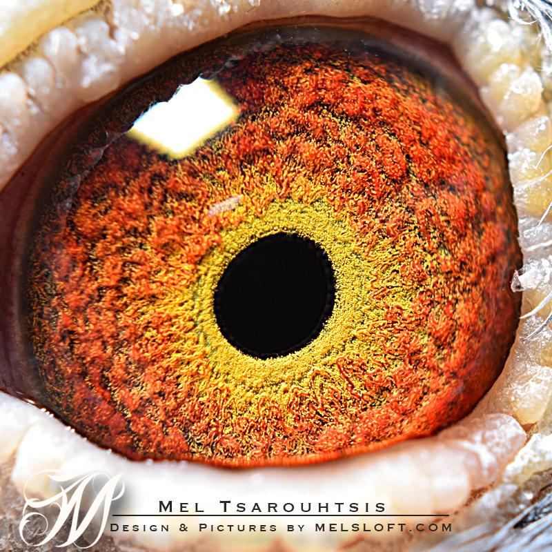 eye of dark king.jpg