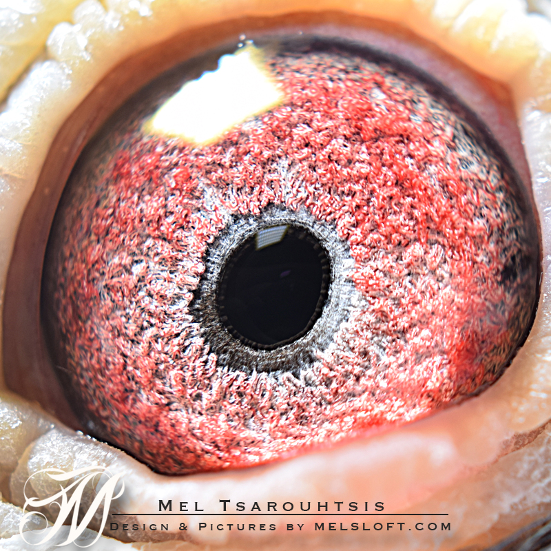 eye of dark queen.jpg