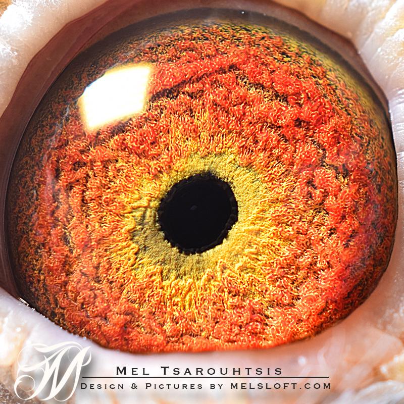 eye of leps 25.jpg