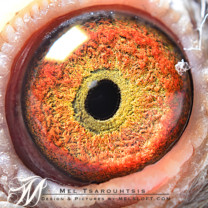 eye of red queen.jpg