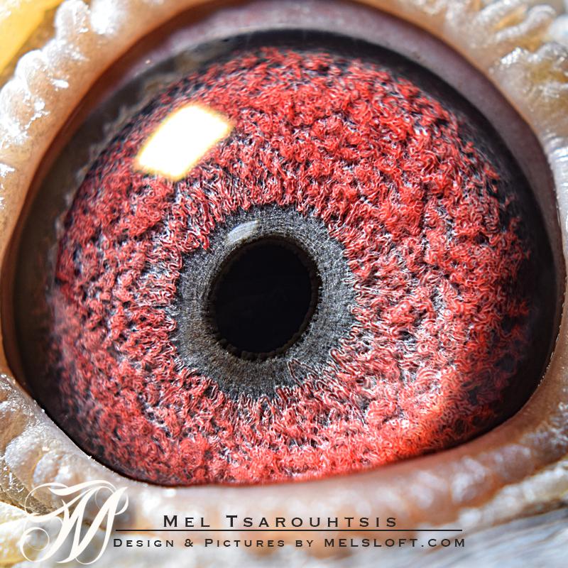 Liams eye.jpg