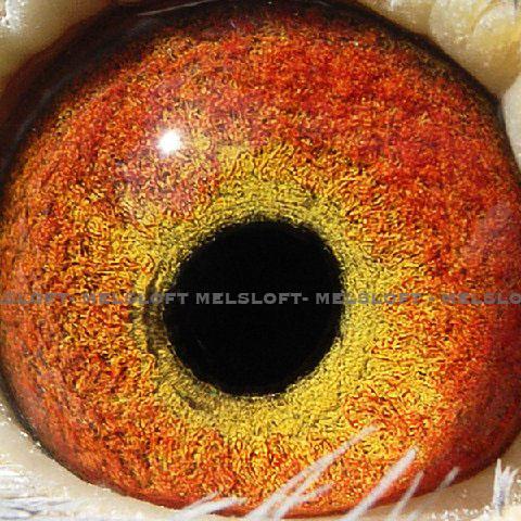 POG 3 eye.jpg