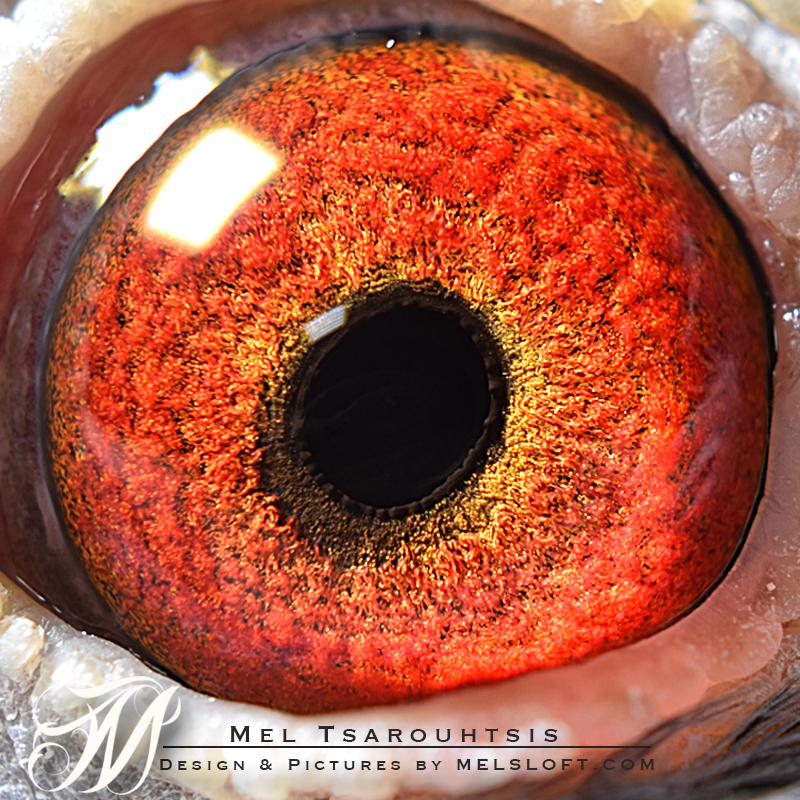 eye of aphrodite.jpg