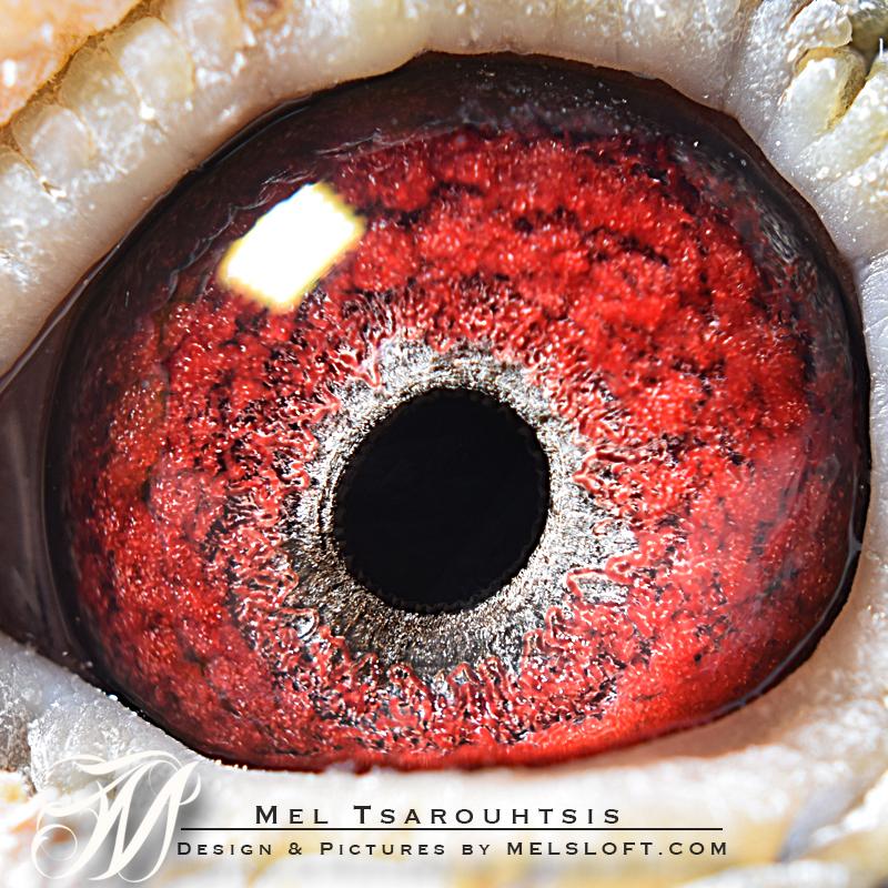 eye of de 411.jpg