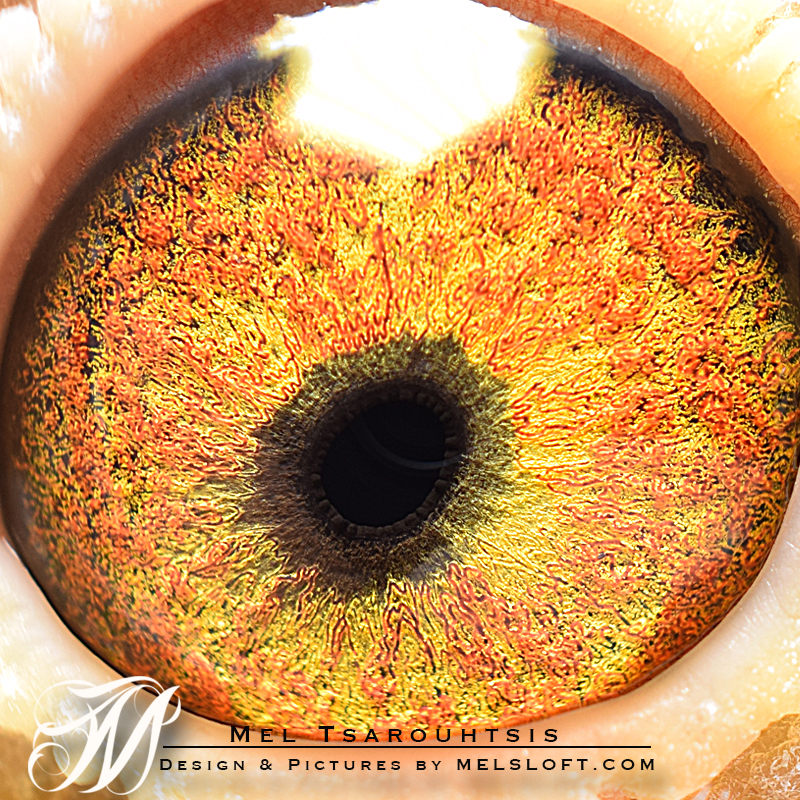 46 eye.jpg