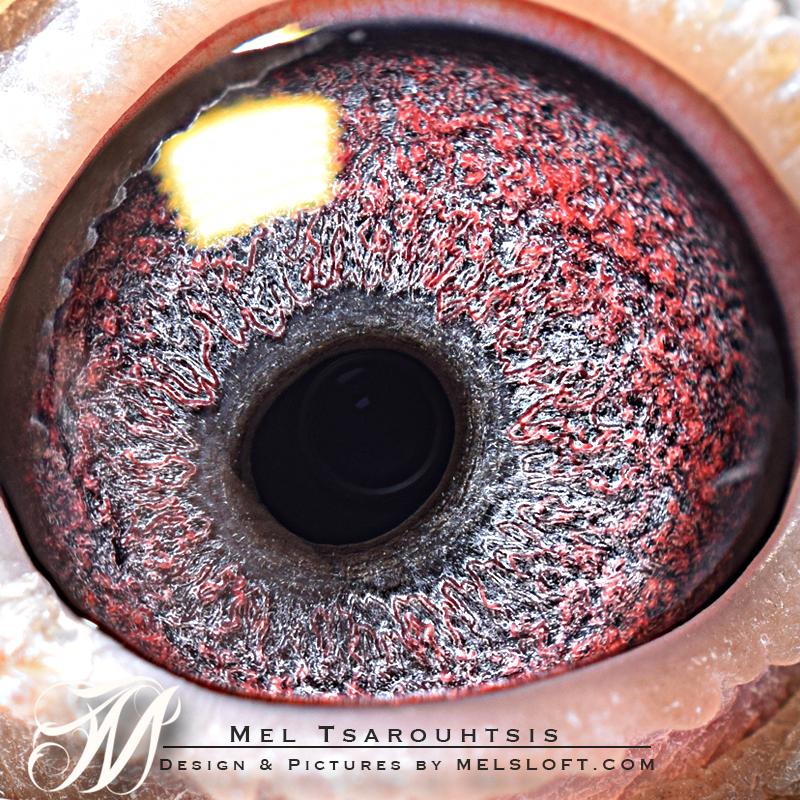 eye of ARTEMIS.jpg