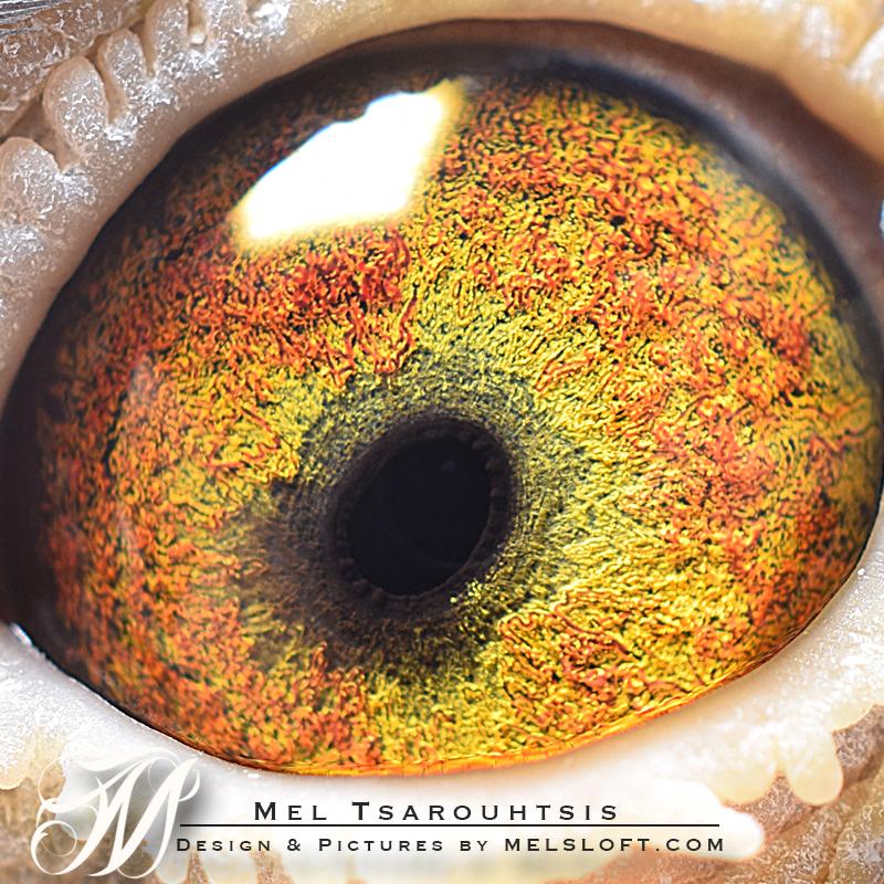 eye of daisy lep.jpg