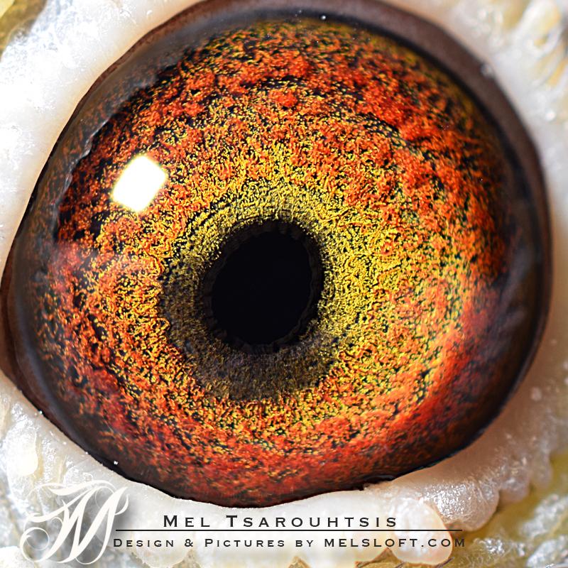 eye of delight.jpg