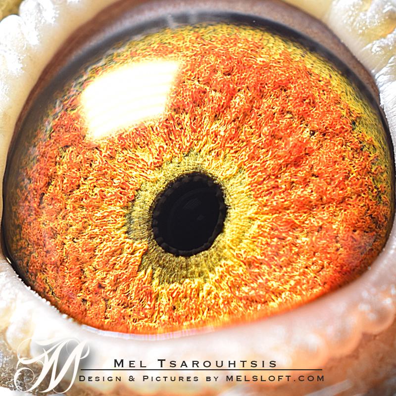 eye of leps charm.jpg