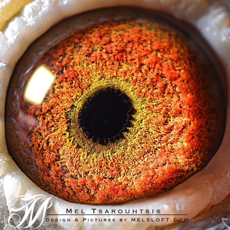 eye of leps desire.jpg