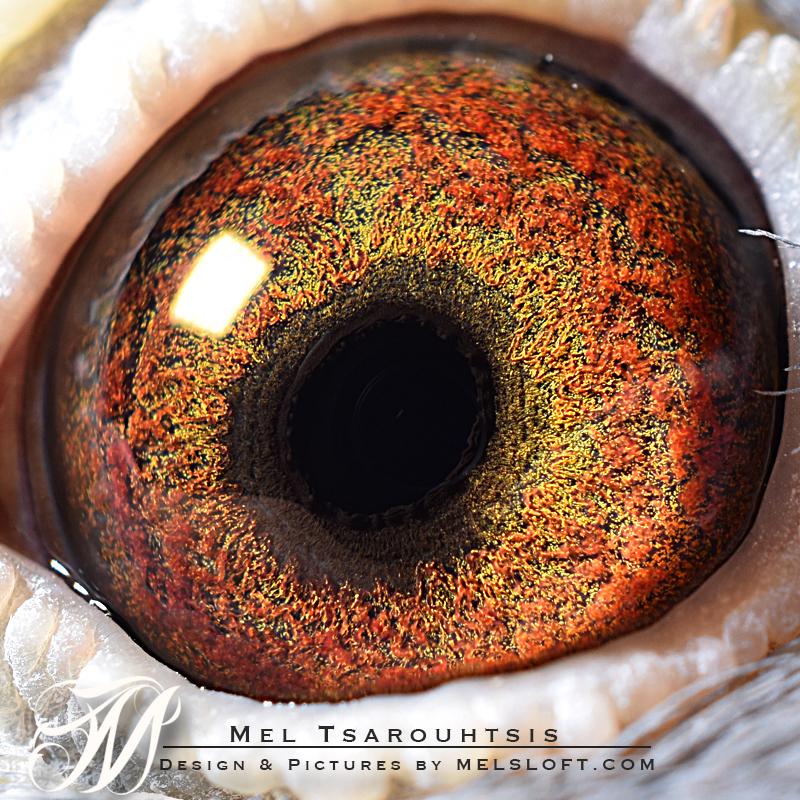 eye of olympia.jpg