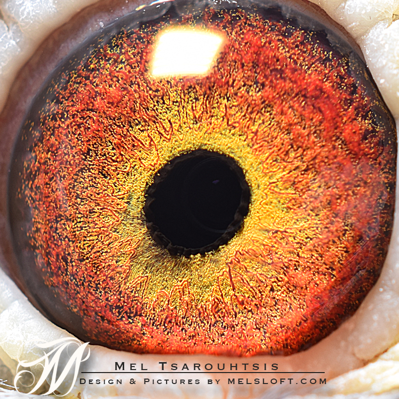 eye of sweet pot.jpg