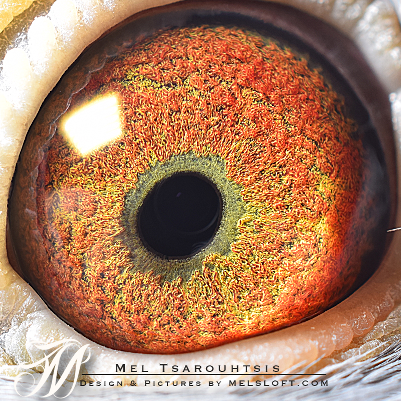 eye of una.jpg