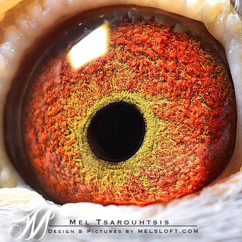 modanona eye.jpg