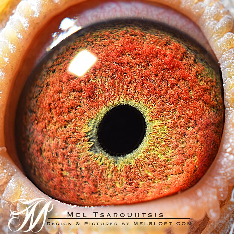 mr sweet eye.jpg