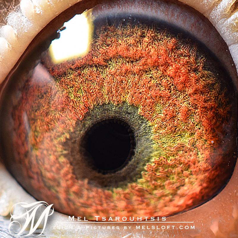72 eye.jpg