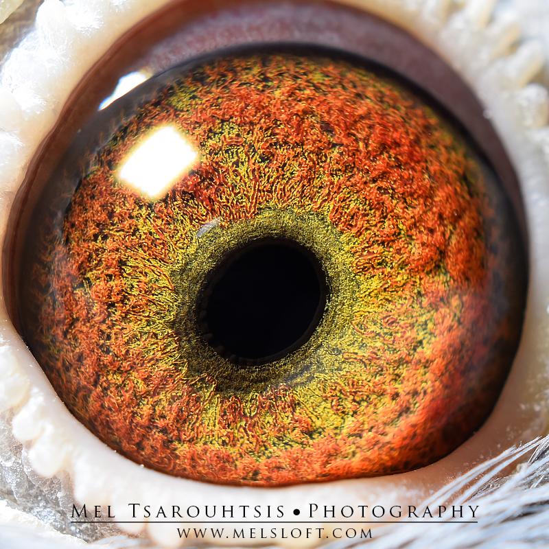 eye of  LUCKS GIRL.jpg