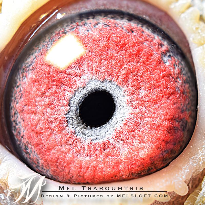 eye of 49 2017.jpg
