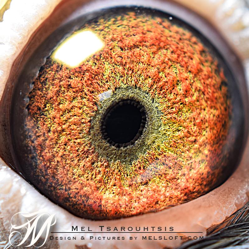 eye of 53 2017.jpg