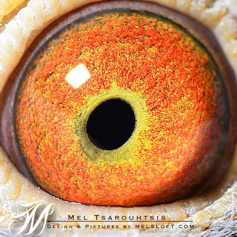 eye of 78 mtfl 2016.jpg