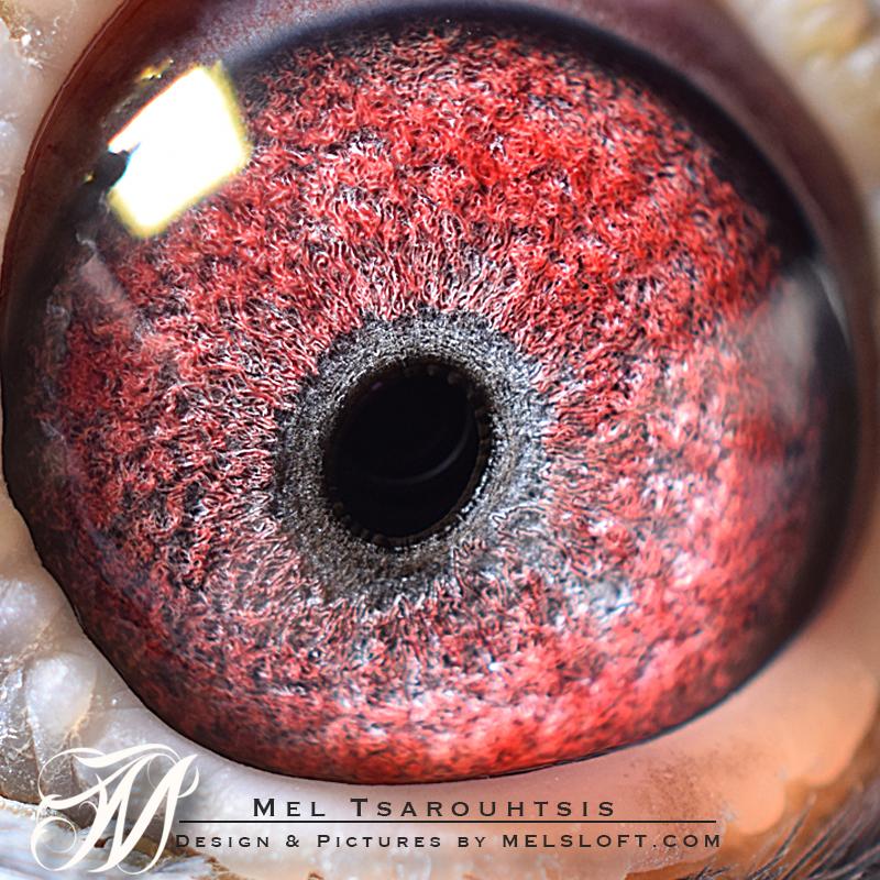 eye of Jolie .jpg