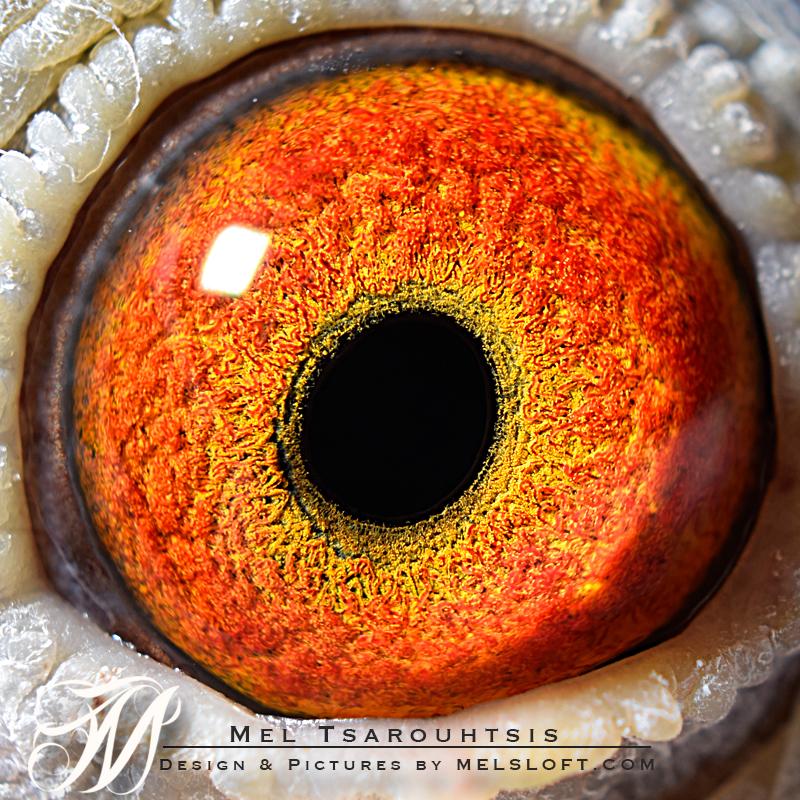 eye of jos girl.jpg