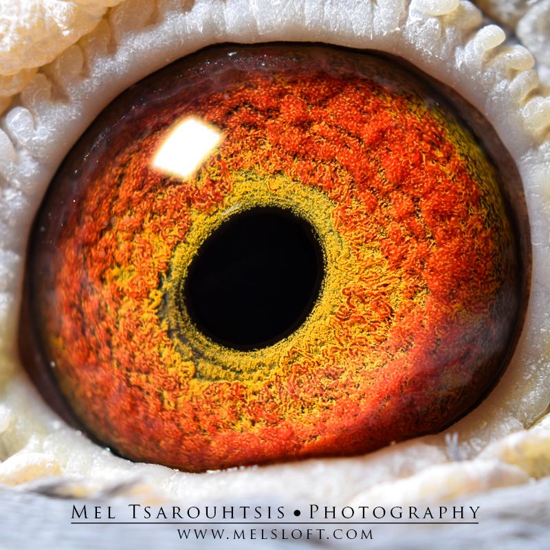 eye of LEPS GURADIAN.jpg
