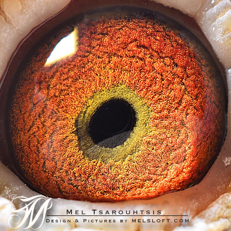 eye of leps uno.jpg