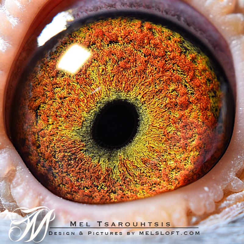 eye of mtfl 58.jpg