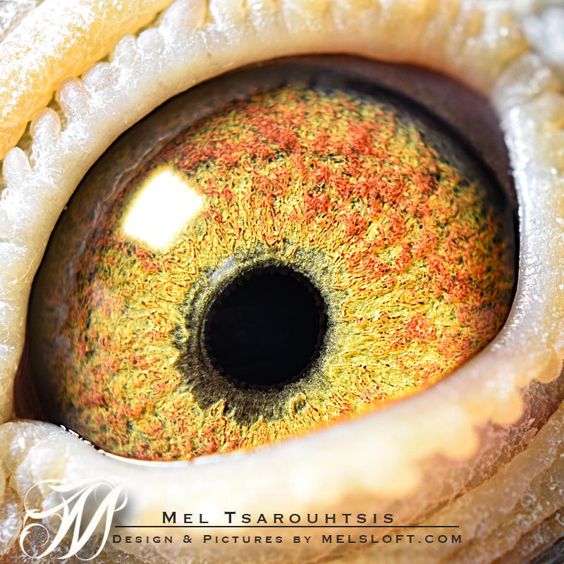 eye of mtfl 66.jpg