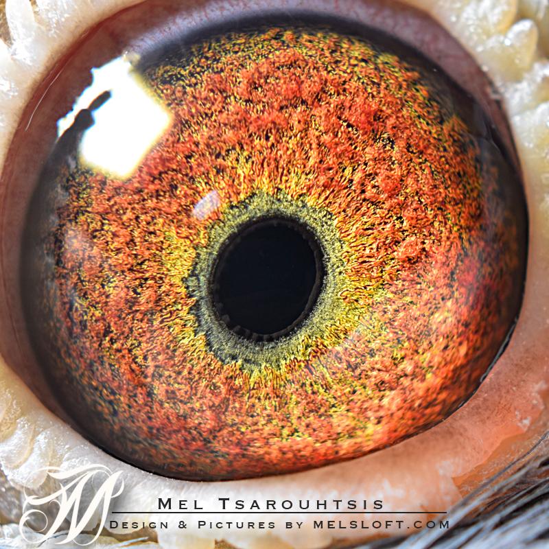 eye of mtfl 75.jpg