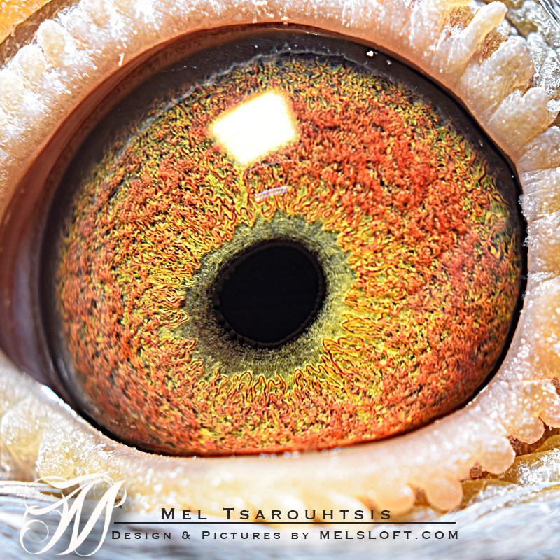 eye of mtfl 73.jpg