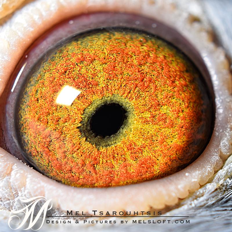 eye of mtfl 77.jpg