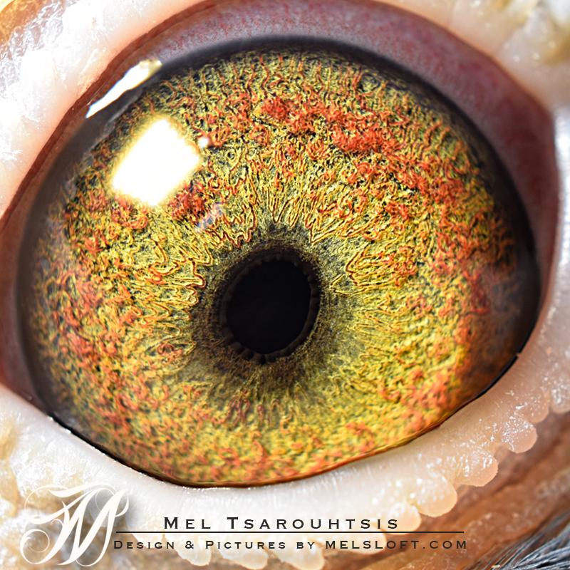 eye of mtfl 79.jpg
