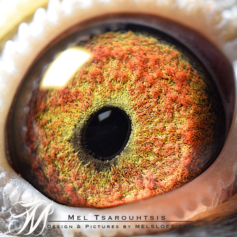 eye of mtfl 82.jpg