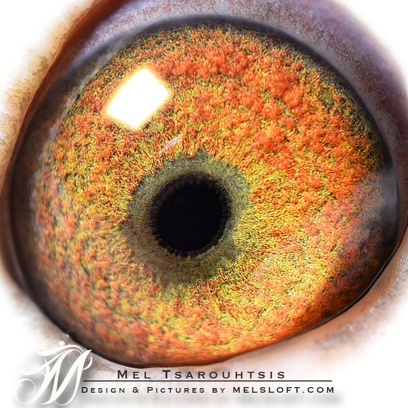 eye of mtfl 85 NEW.jpg