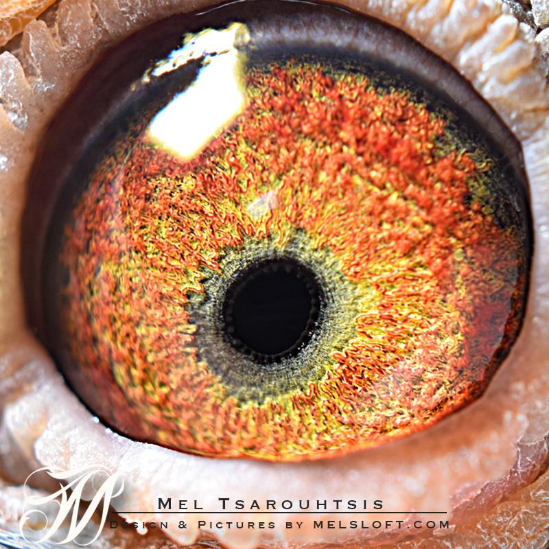 eye of mtfl 89.jpg