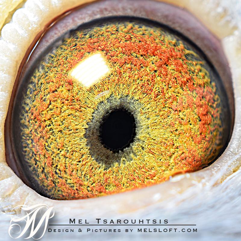 eye of mtfl 87.jpg