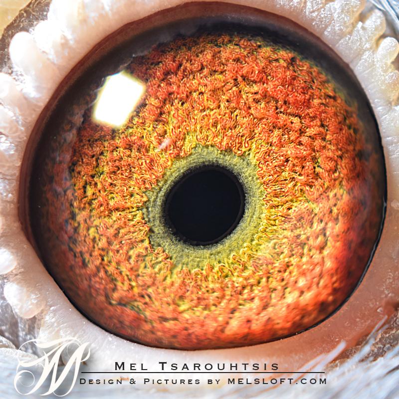 eye of mtfl 91.jpg