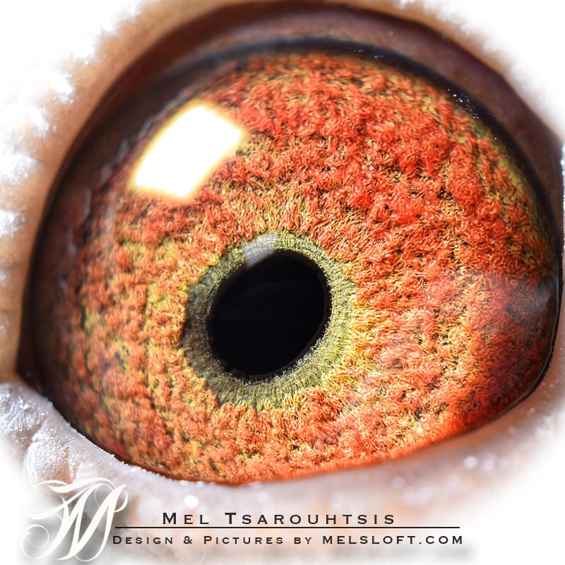 eye of mtfl 98.jpg