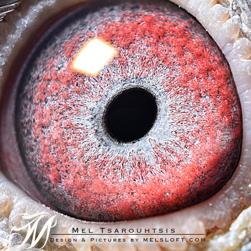 eye of mtfl 93 LC.jpg