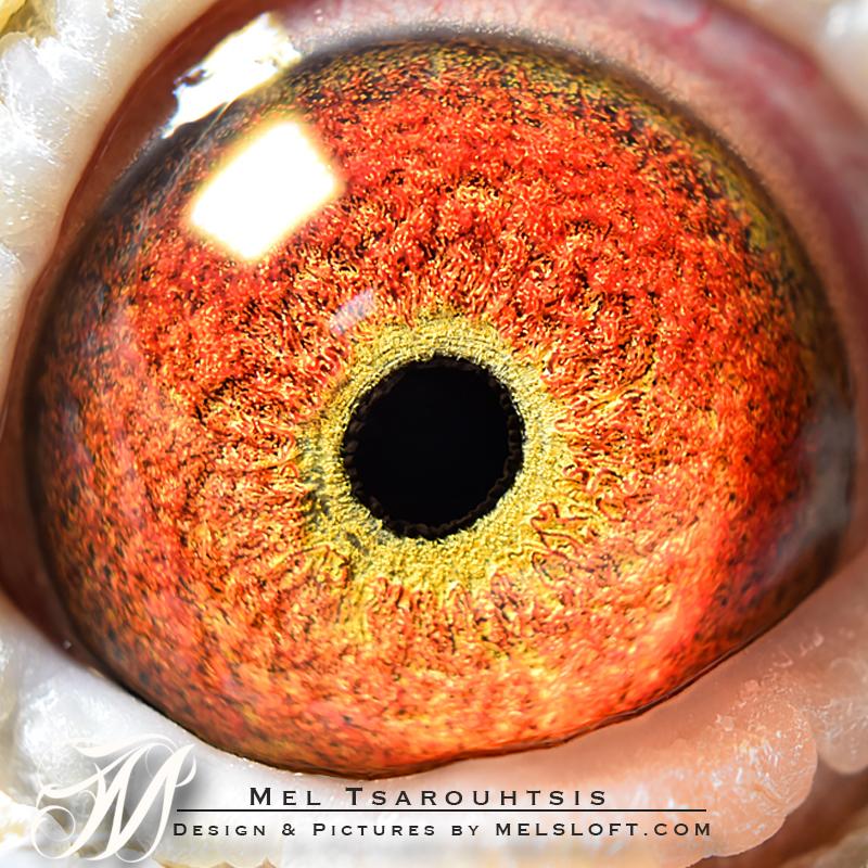 eye of mtfl 954.jpg