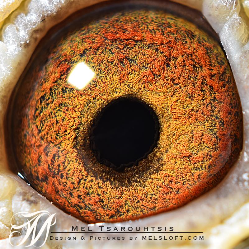 eye of nellie.jpg