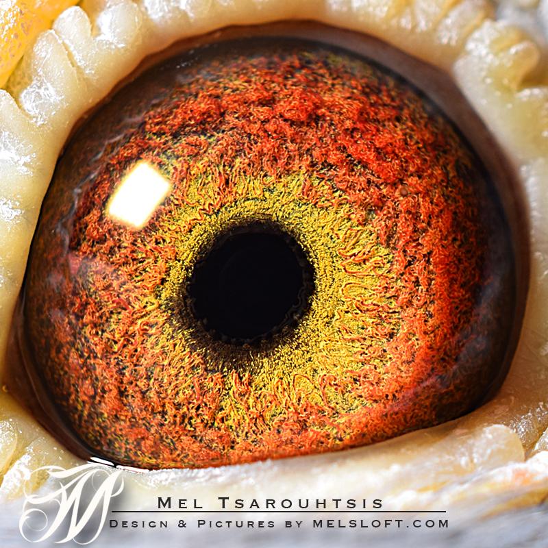 eye of sarah.jpg