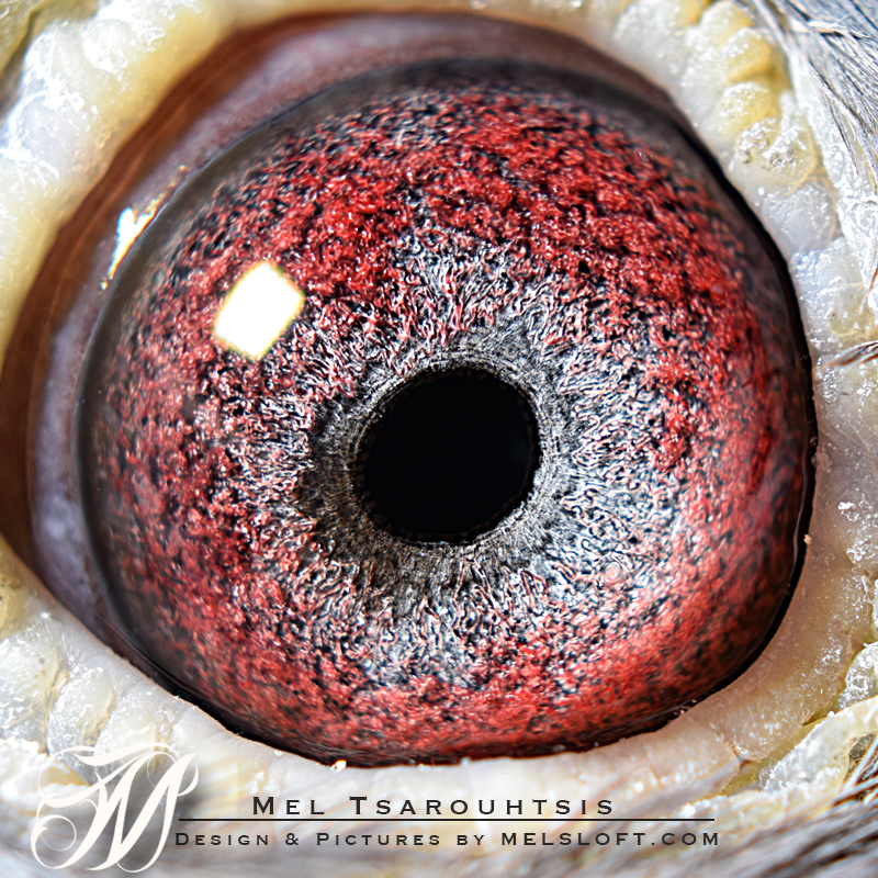 eye of treble 8.jpg