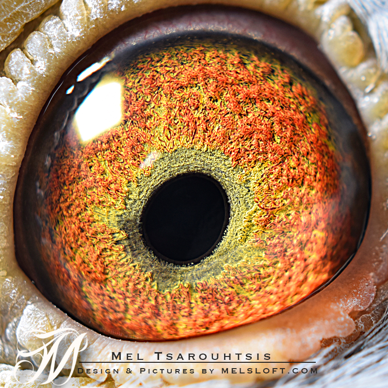eye of VANTAGE.jpg